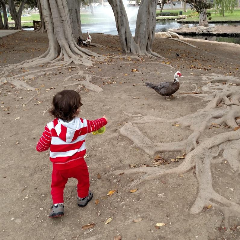 Hiking duck2