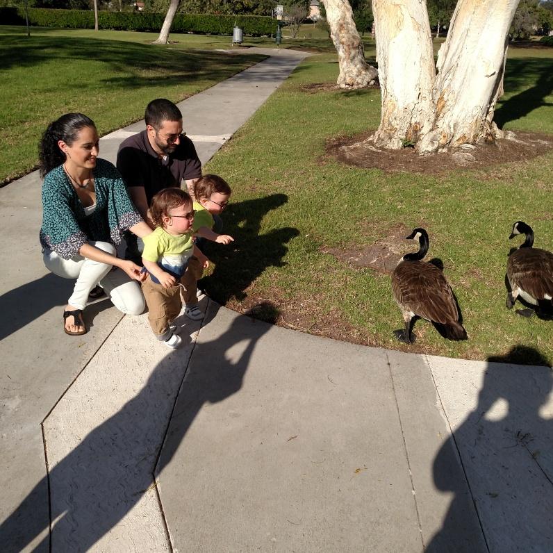 Persiguiendo a los gansos