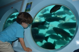 Submarino Catalina Island (1)