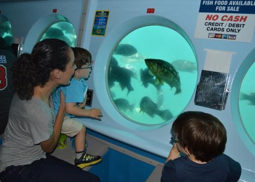 Submarino Catalina Island (11)