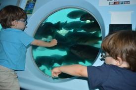 Submarino Catalina Island (4)